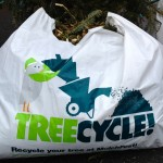Resolving to Improve Your Neighborhood Urban Trees in 2013 | Curb Allure Blog
