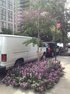 An abundance of flowers make for a natural deterrent to protect urban trees