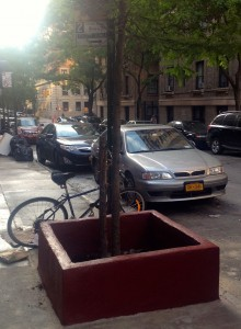 New York City no longer allows solid-walled guards, which can rot trunks, compact soil and limit trees' water supply. That's especially problematic for young trees that need lots and lots of water to grow. Notice how spindly the tree above looks?