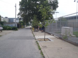 Photo courtesy of City of Philadelphia Parks & Recreation displaying a tree pit in need of tree guard protection